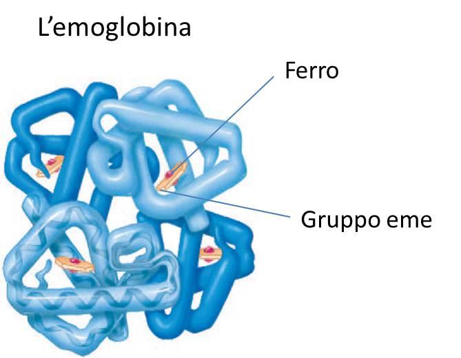 Ferro,-sostanza-importante-nelle-carenze-di-emoglobina